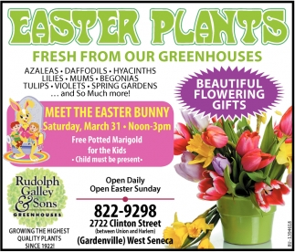 Easter Plants