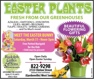 Easter Plants