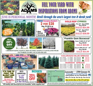 Fill Your Yard With Inspirations From Adams Nurseries Lancaster Ny