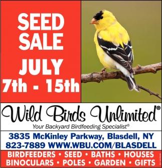 Backyard Birds Latham Ny - House of Things Wallpaper