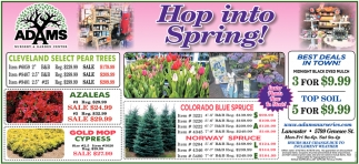 Hop Into Spring!