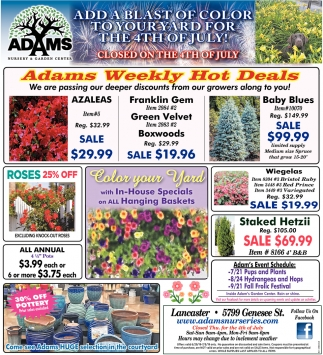 Adams Weekly Hot Deals