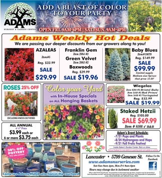 Adams Weekly Hot Deals
