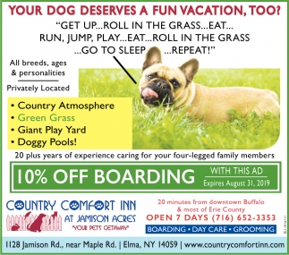 Your Dog Deserves a Fun Vacation, too